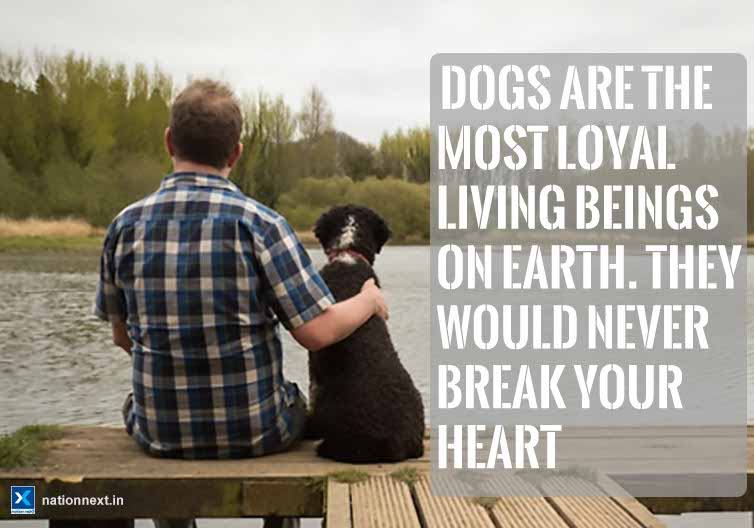 If you own a dog, you definitely know how awesome these four-legged furballs are! Here are 10 reasons for you to love your lovely dog a bit more!