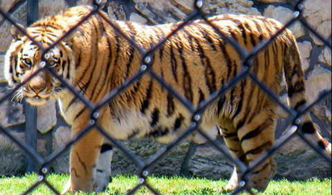 In its bid to protect forests, Government has taken a conscious decision to establish Gorewada International Zoo and Bio park on the forestland in Nagpur.