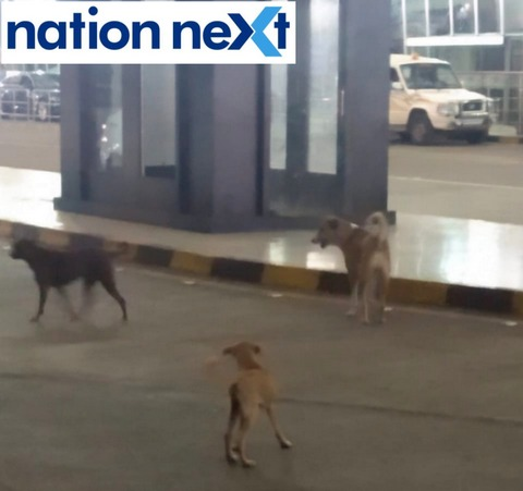 Authorities at Nagpur airport seem to be oblivious to the presence of stray dogs and garbage littered at the entrance to the airport.